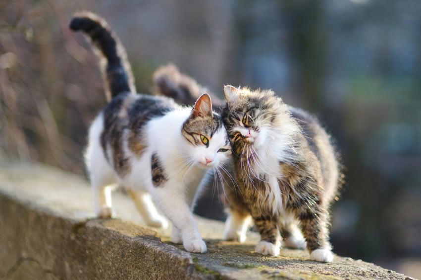Due gatti su un muretto