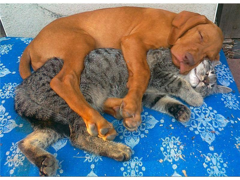 cane e gatto si amano
