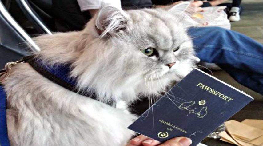 il-gatto-con-passaporto