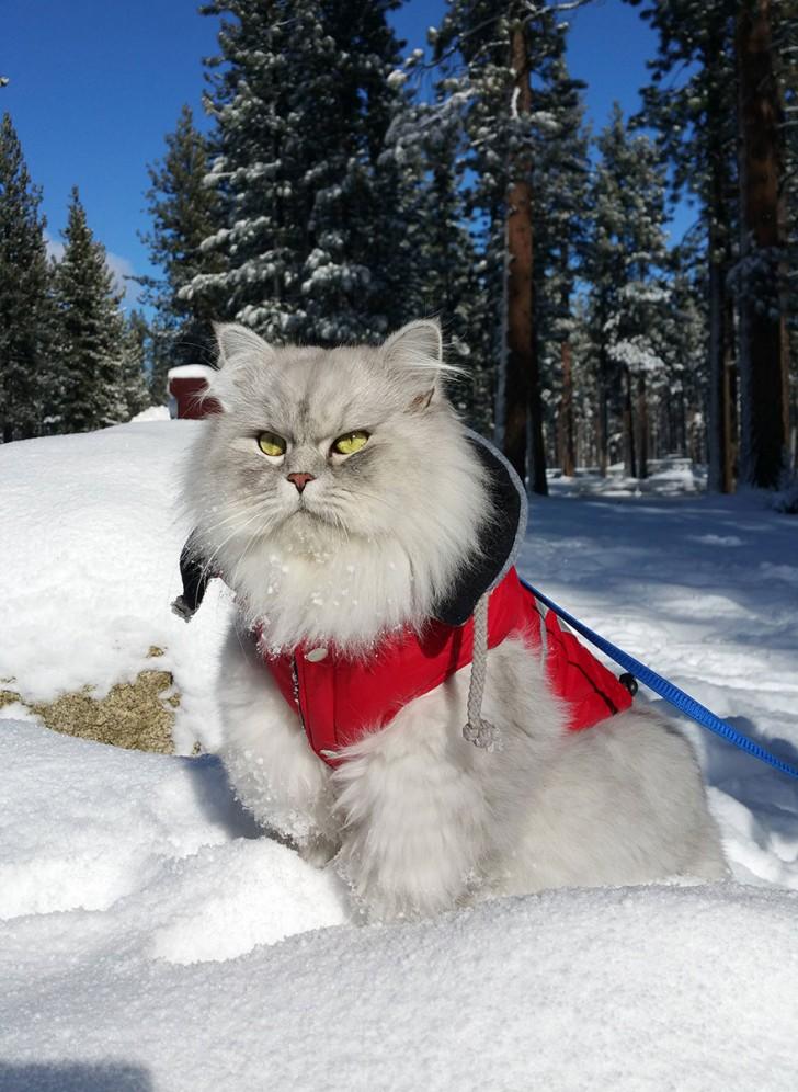Gandalf-sulla-neve