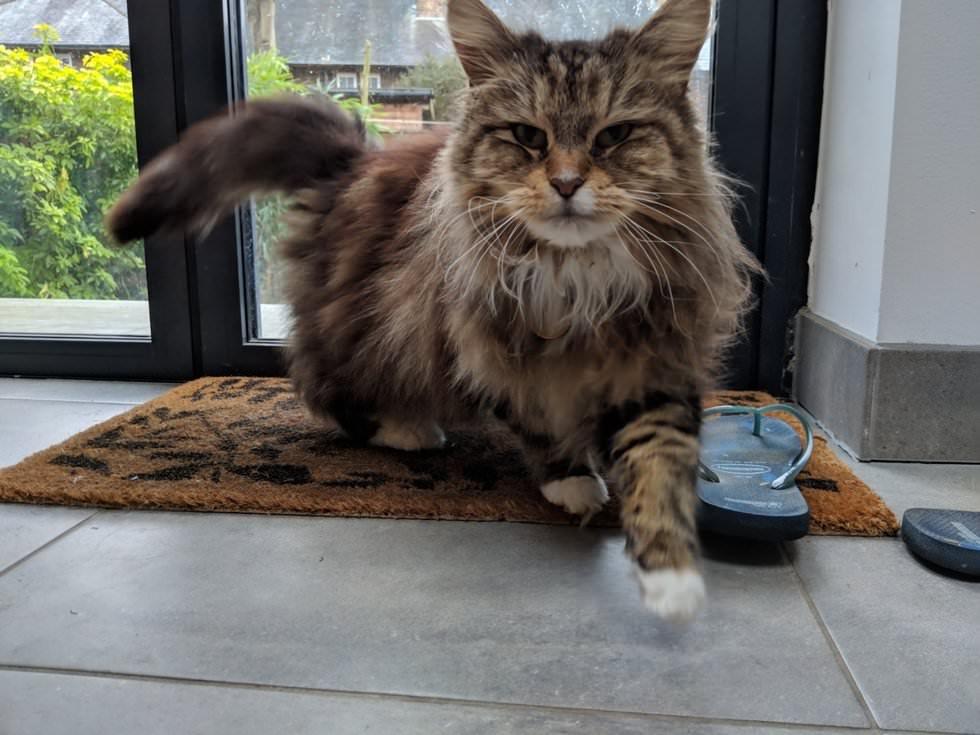 gatto-entra-in-casa