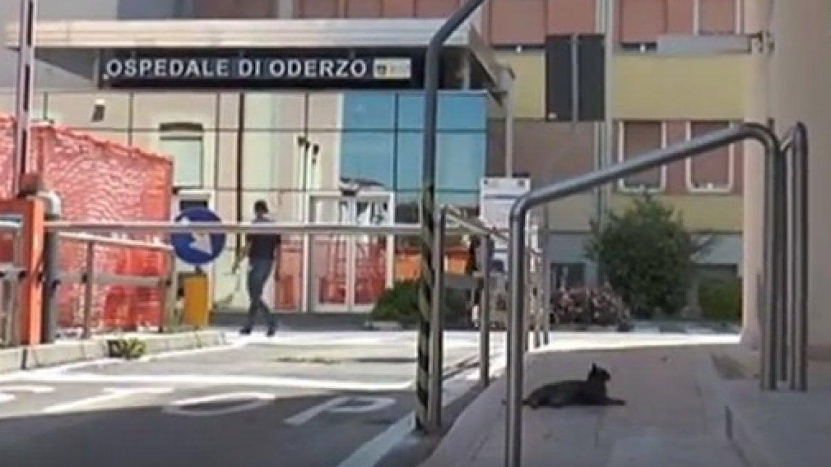 Gatta che attende il padrone fuori dall'ospedale