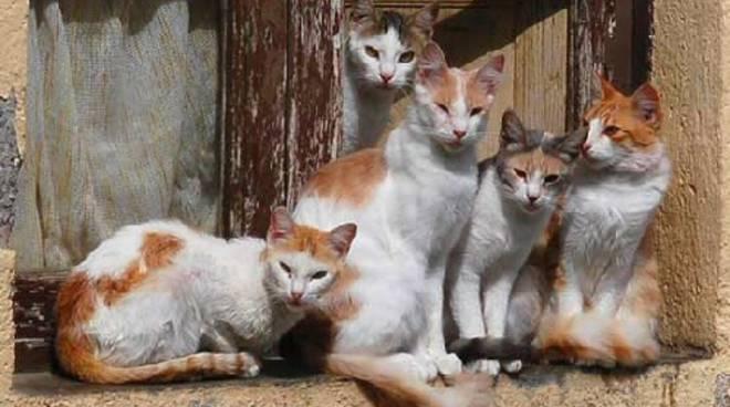 Gatti che vivono per strada