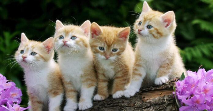 Gatti comprati online, ma facevano una bruttissima fine