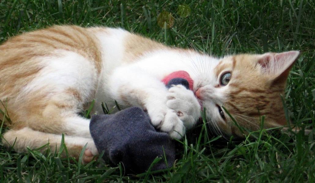 Gattino che gioca con un calzino