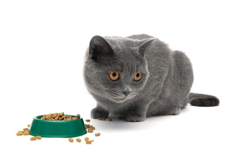 Gattino che mangia dei croccantini