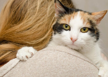 Gatto abbracciato ad una donna