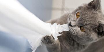 Gatto che distrugge della carta igienica