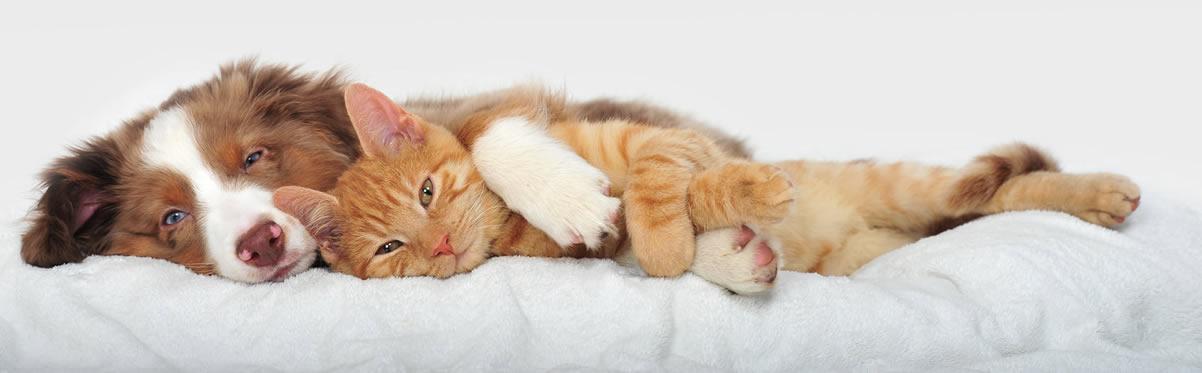 Gatto che dorme abbracciato ad un cane