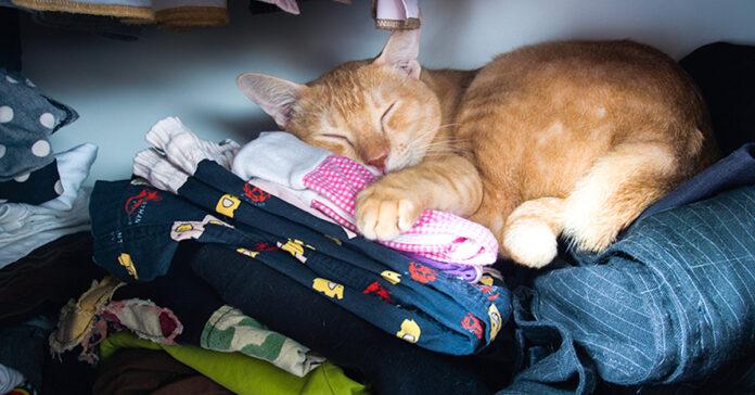 Gatto che dorme in un armadio