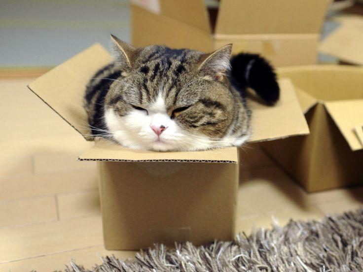 Gatto che dorme in una scatola