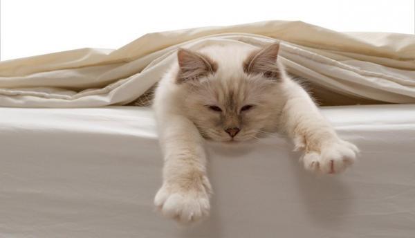 Gatto che dorme sotto il lenzuolo