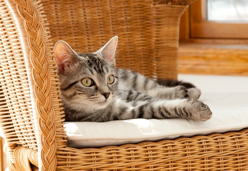 Gatto che dorme su un cuscino