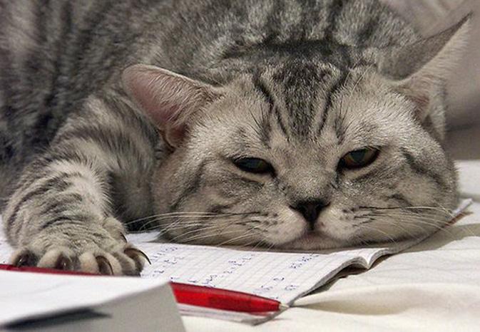 Gatto che dorme su un quaderno