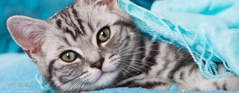 Gatto che dorme su una sciarpa