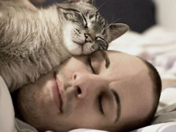 Gatto che dorme sul padrone