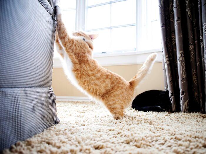 Gatto che graffia il divano