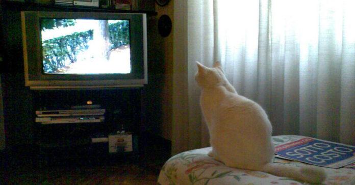 Gatto che guarda la televisione