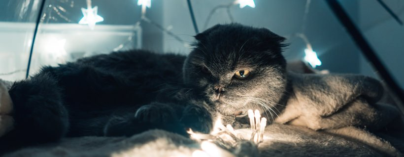 Gatto che guarda nella penombra