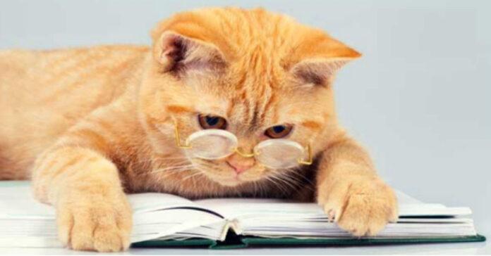Gatto che legge un libro