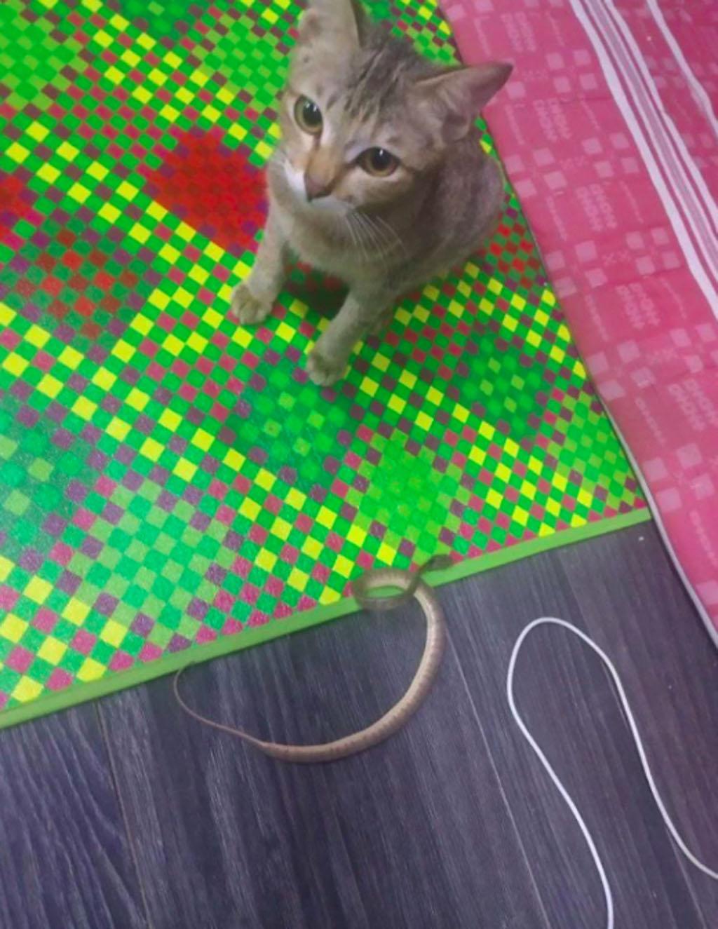 Gatto che porta un serpente al padrone