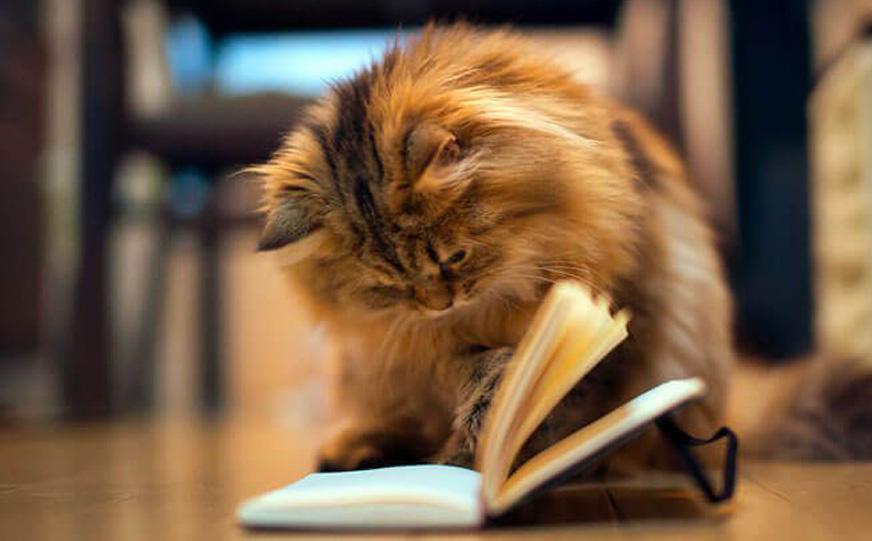 Gatto che sfoglia un libro