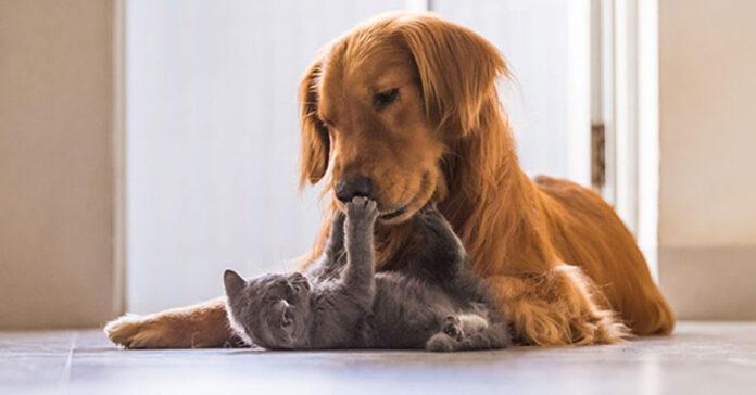 Gatto che tira una zampata ad un cane