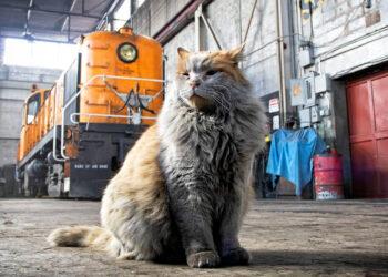 Gatto che vive in una stazione ferroviaria