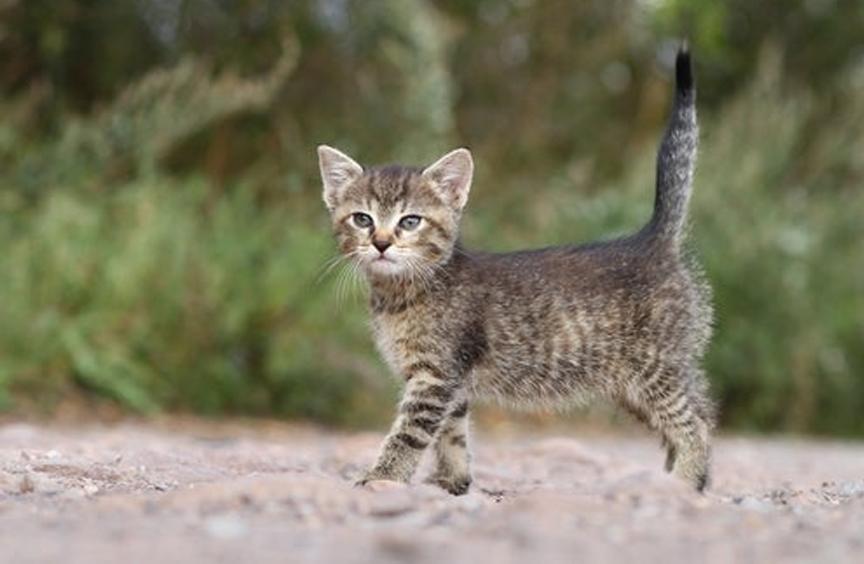 Gatto con coda all'insù