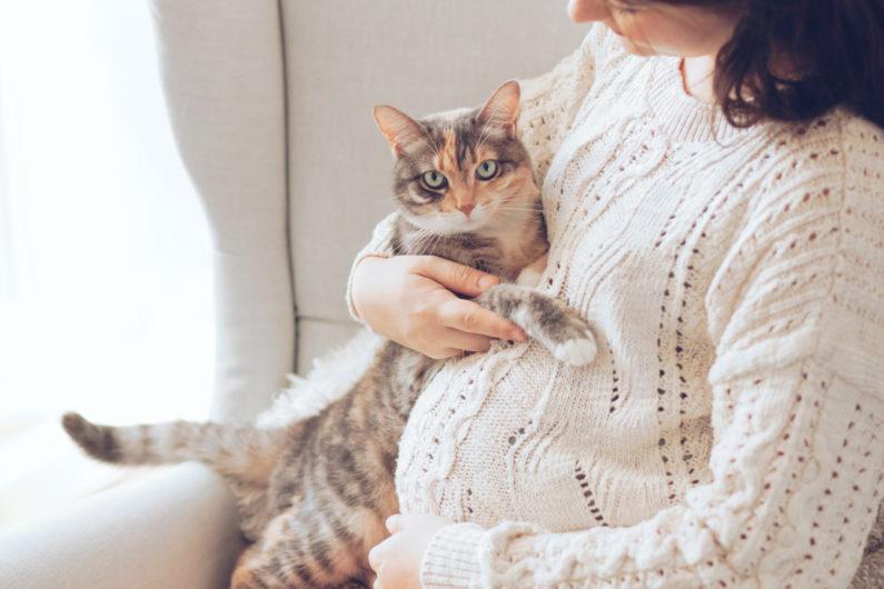 Gatto con una donna incinta