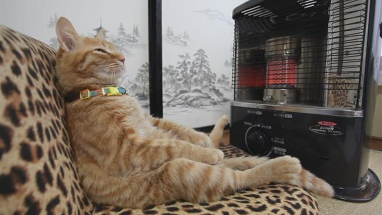 Gatto davanti ad una stufa