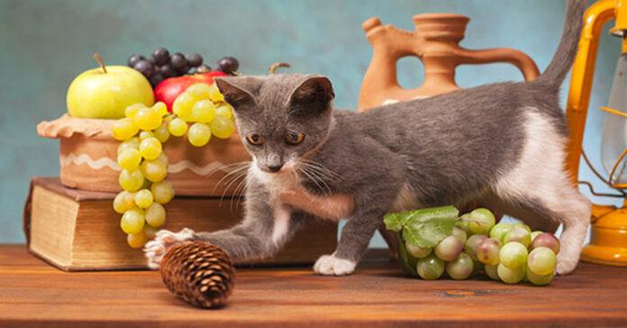 Gatto fa cadere oggetti dal tavolo
