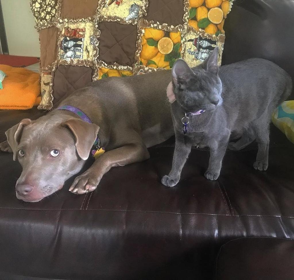 gatto cieco e cane a casa