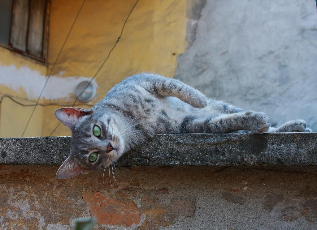 Gatto sdraiato su un muro