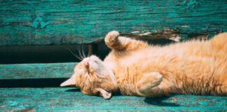 Gatto sdraiato su una panchina