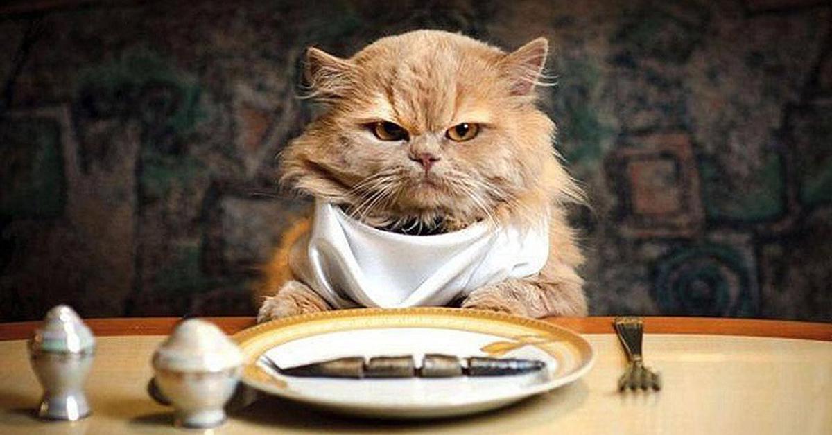 Gatto seduto a tavola con bavaglio