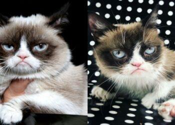gatto-arrabbiato