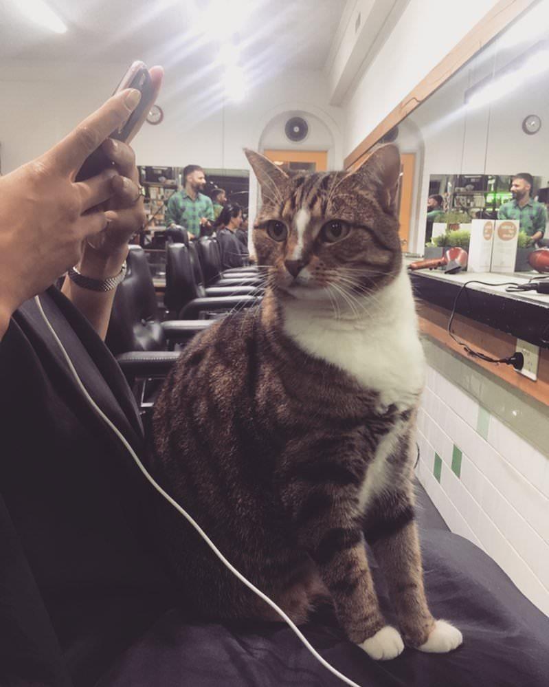 gatto-passatempo-parrucchiere