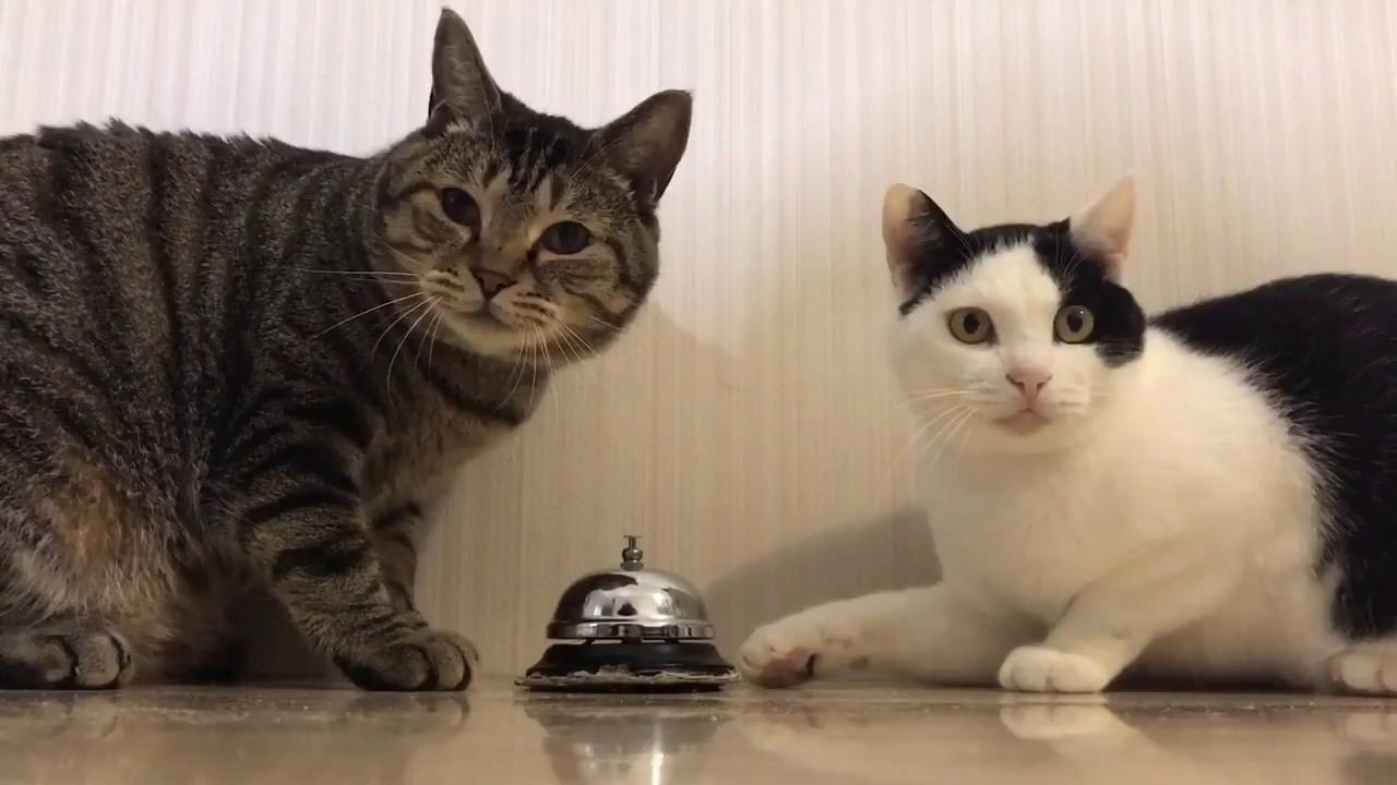 I gatti suonano il campanello
