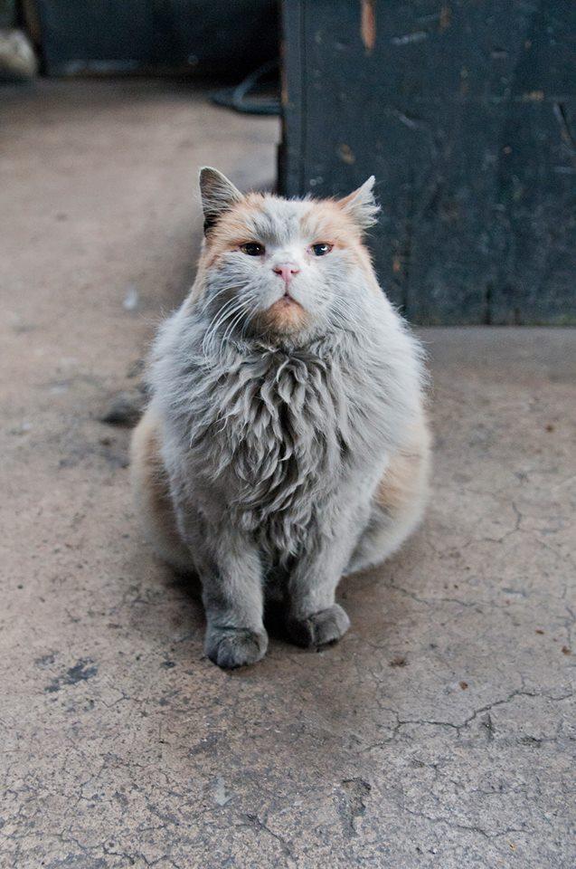 Il gatto Dirt