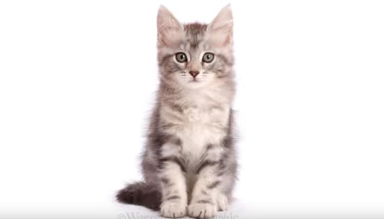 Il gatto Freya