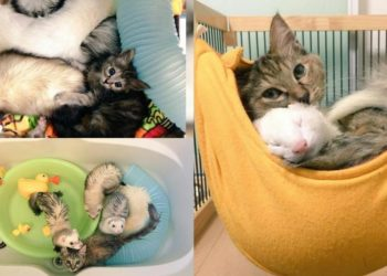 Komari-il gatto-che-si-crede-un-furetto