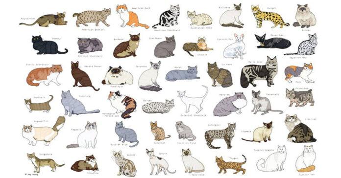 La razza di gatto perfetta per ogni segno zodiacale