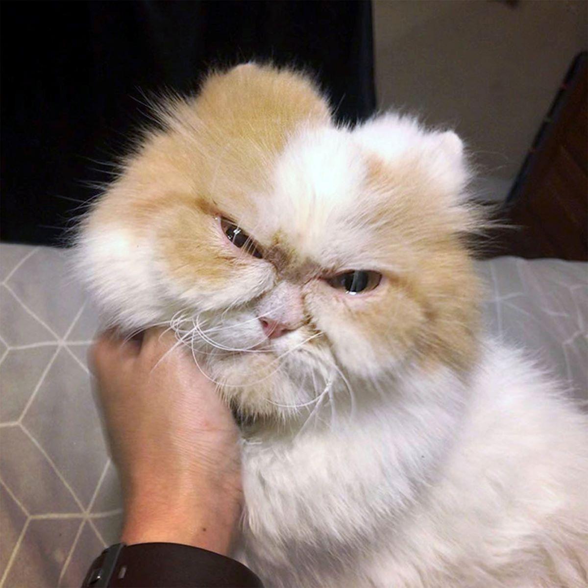 gatto-che-si-fa-coccolare