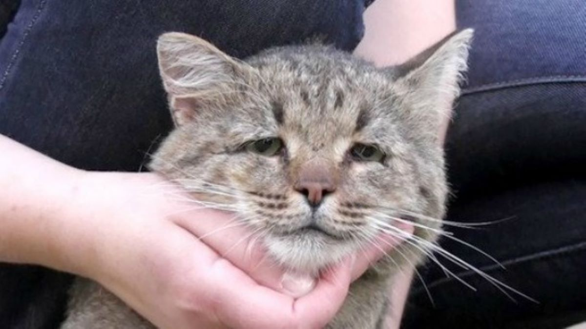 gatto-triste-che-guarda