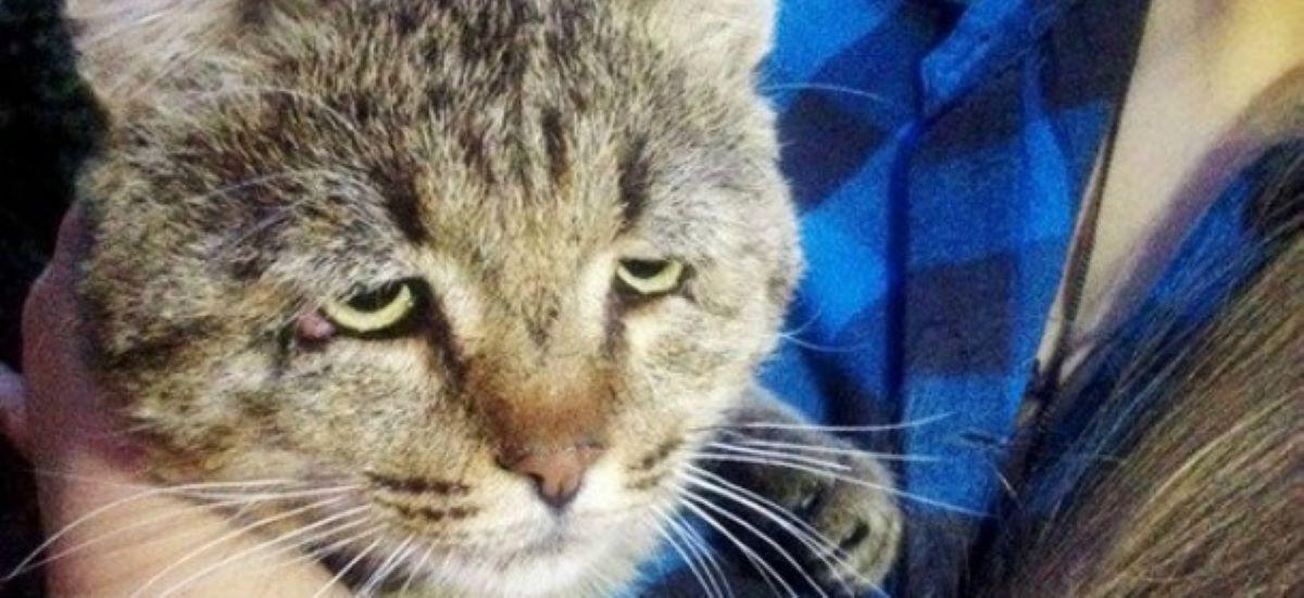 gatto-con-muso-triste
