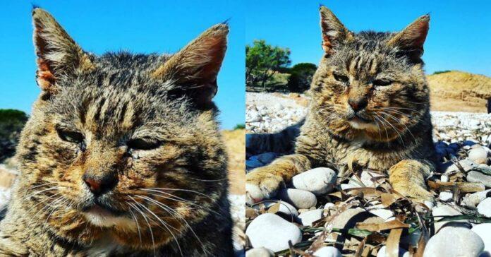 gatto-su-spiaggia