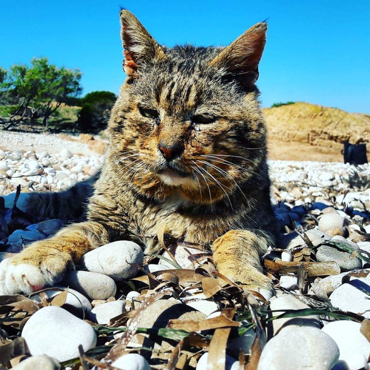 gatto-tigrato-al-mare