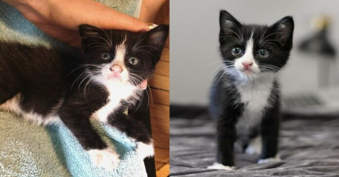 gattino-bianco-e-nero