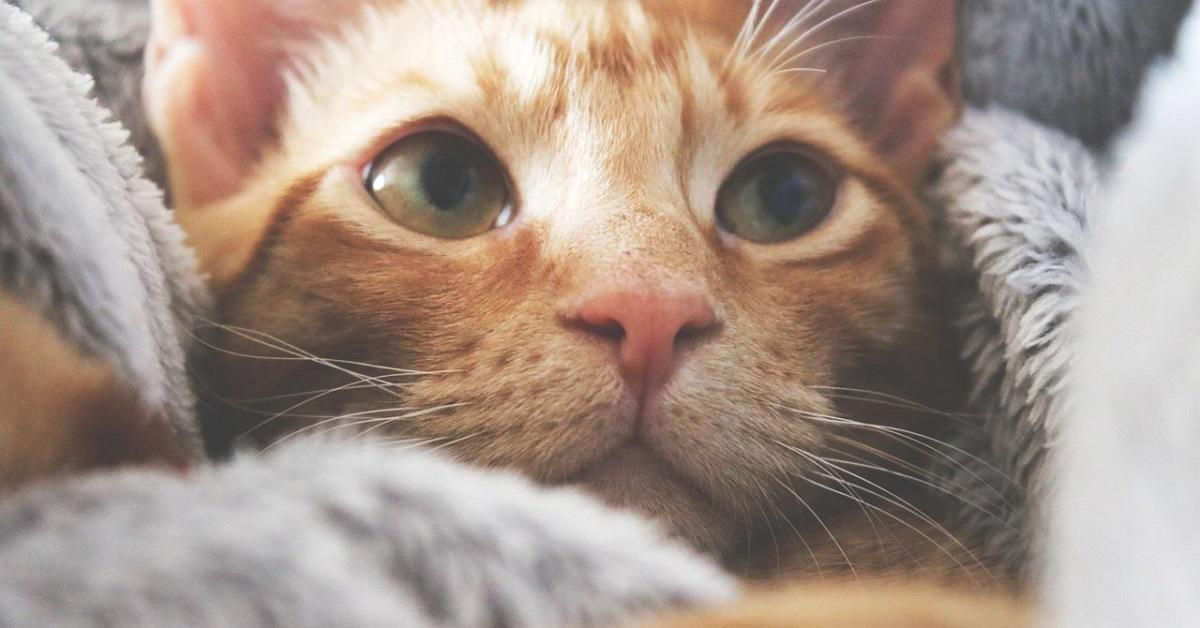 gatto fra le coperte